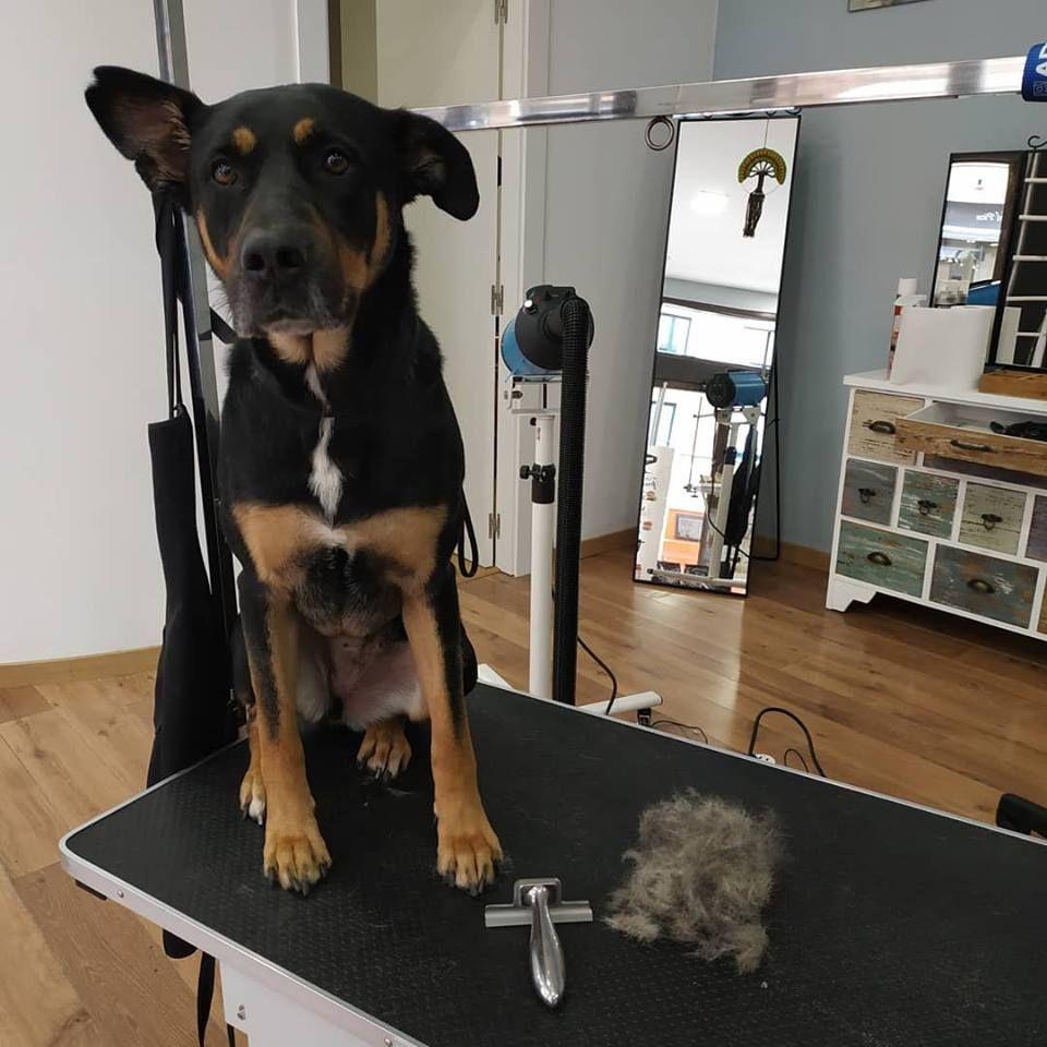 Pienso natural para perros Gijón