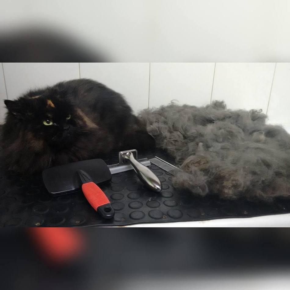 Peluqueria Felina: Servicios de Perro Bello