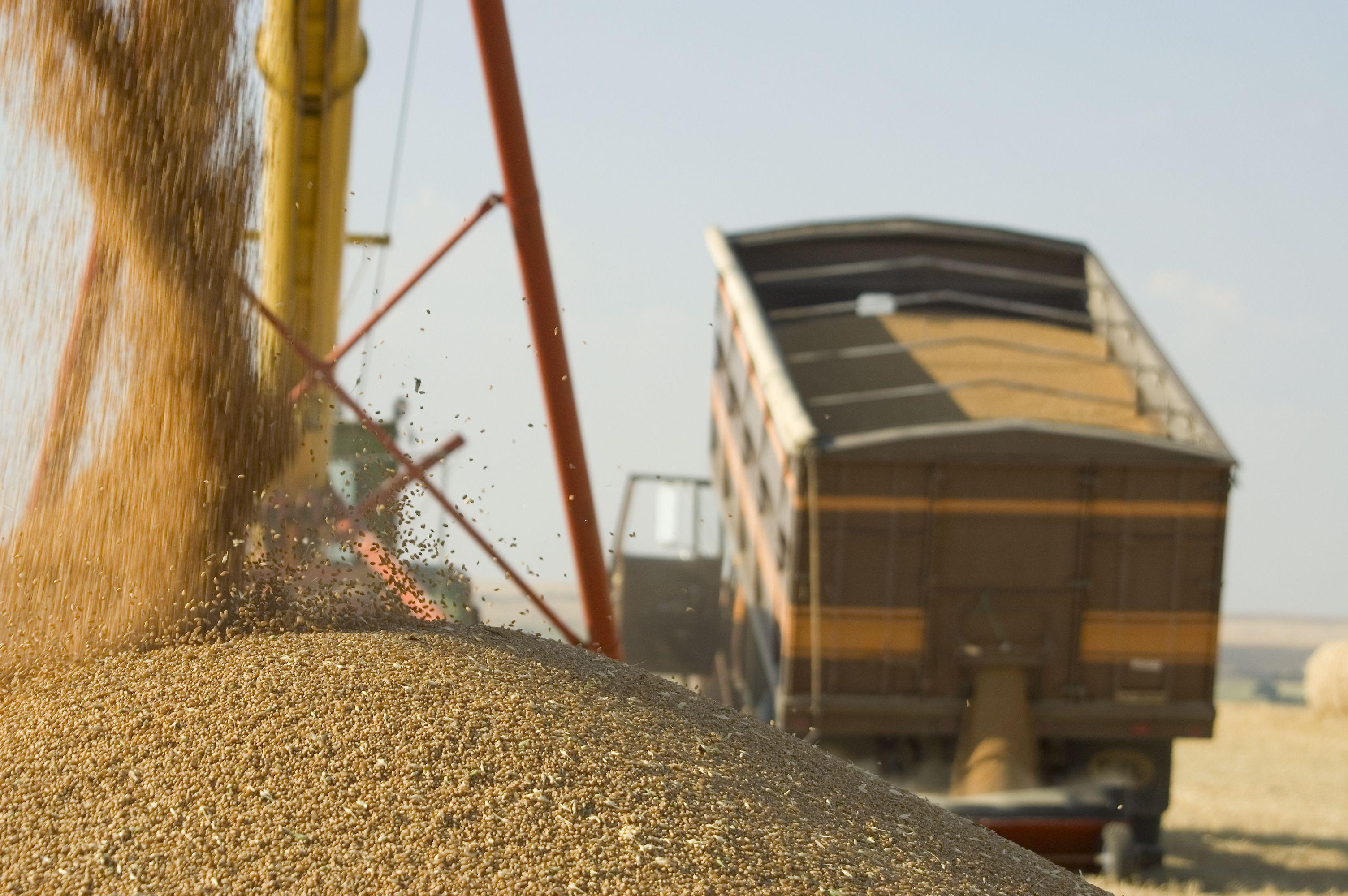 Transporte de cereales y piensos a granel