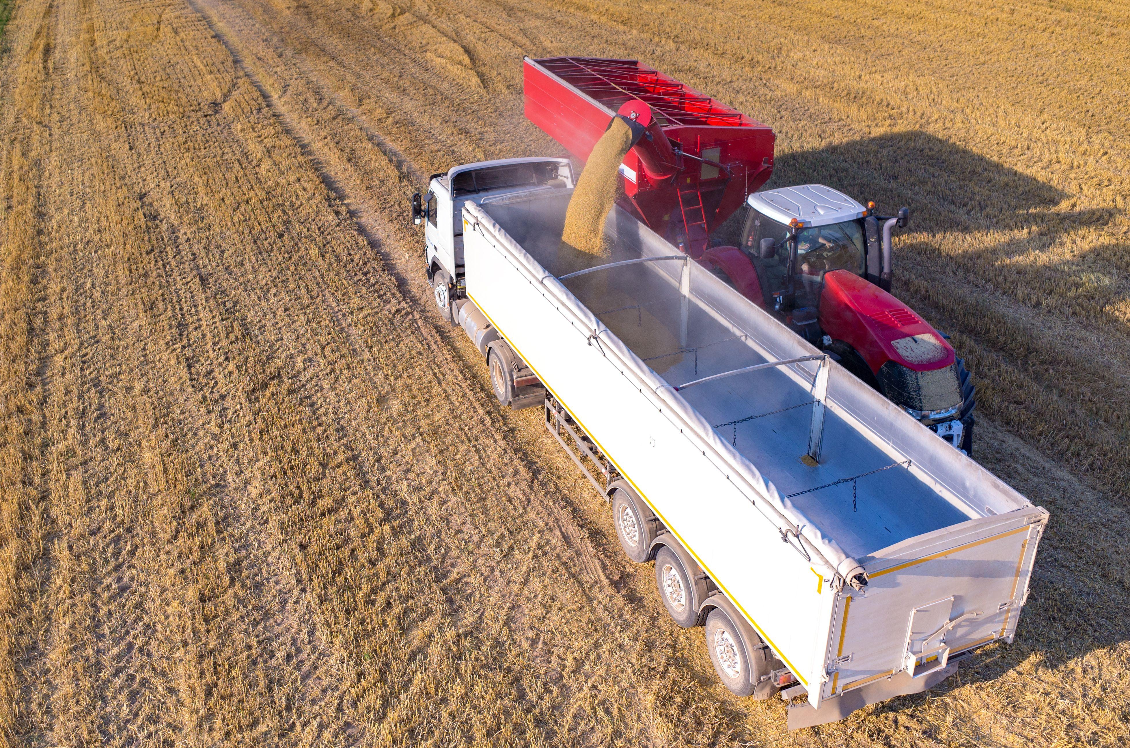 Transporte de cereales y abonos: Servicios de Transangel