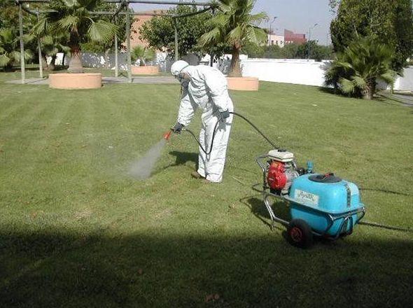 Control de plagas en Canarias