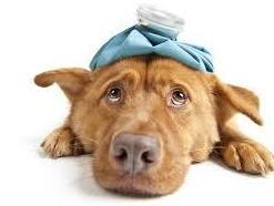 Cómo detectar y prevenir el Golpe de calor en tu mascota