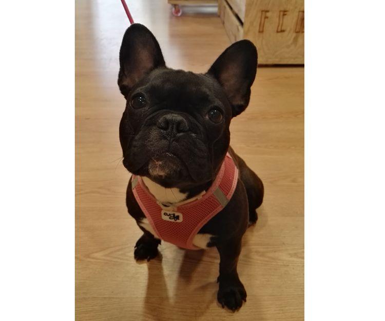 Productos naturales para mascotas en Sant Cugat del Vallés