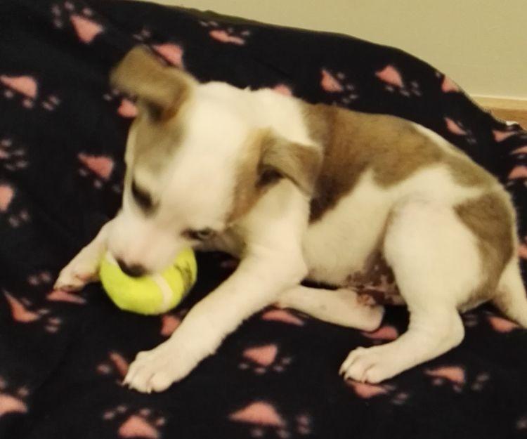 Juguetes para  mascotas Sant Cugat del Vallés