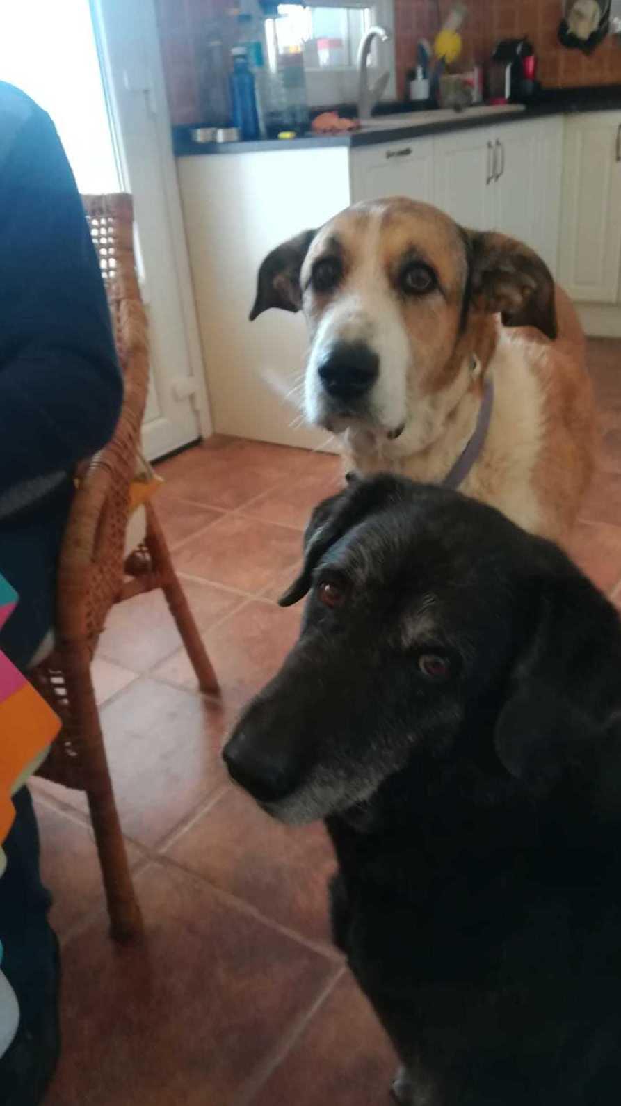 Can Exprés servicio veterinario a domicilio Zaragoza: Lupe y Gala ,Lupe(negra) es positiva y la mantenemos sana a leishmania. Ambas muy expresivas y buenas compañeras