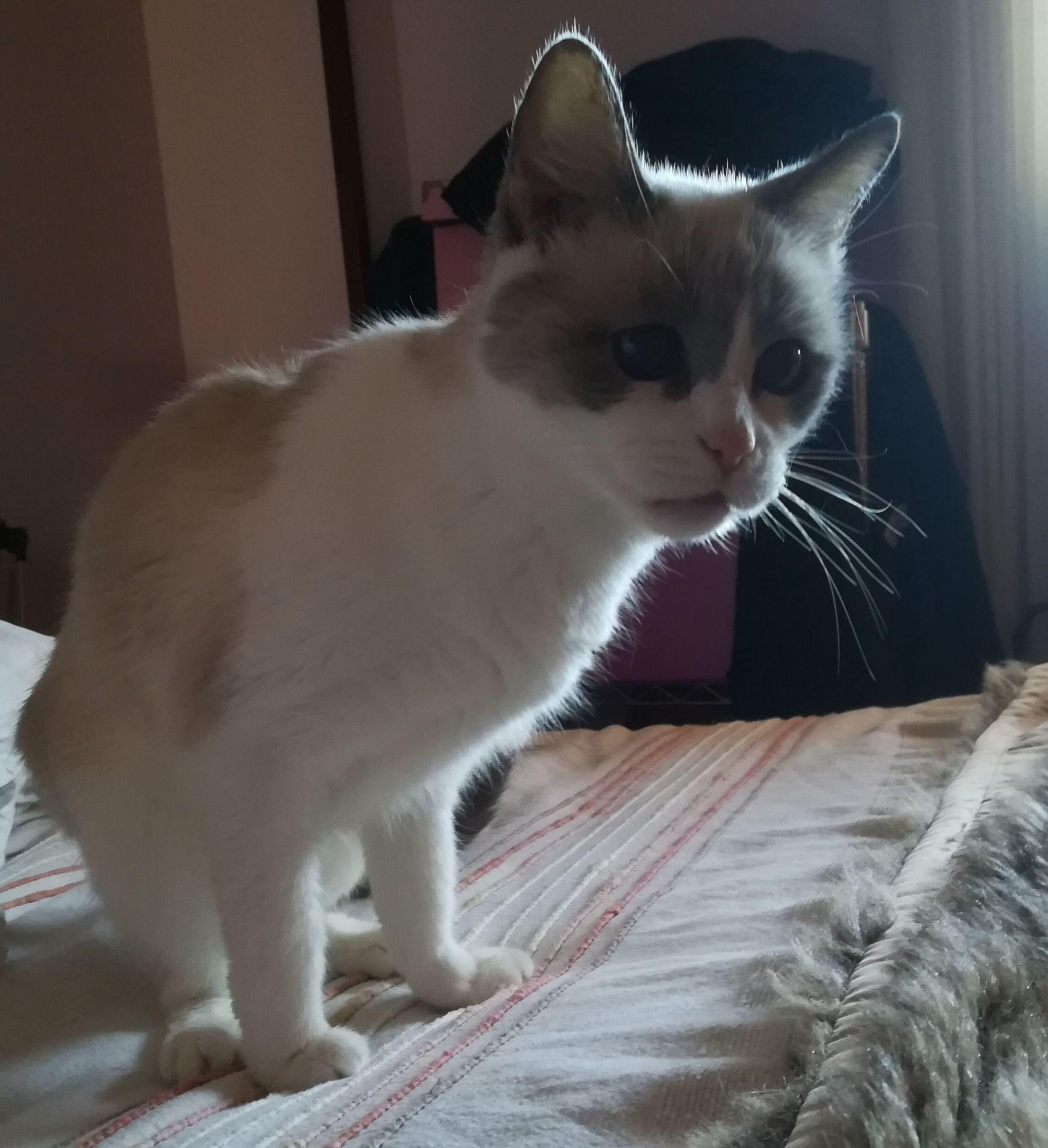Can Exprés Servicio Veterinario a Domicilio Zaragoza: gata de 20 años con buena calidad de vida.