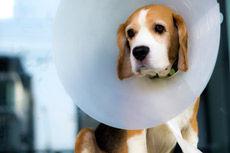 Cirugía: Servicios de Can Exprés