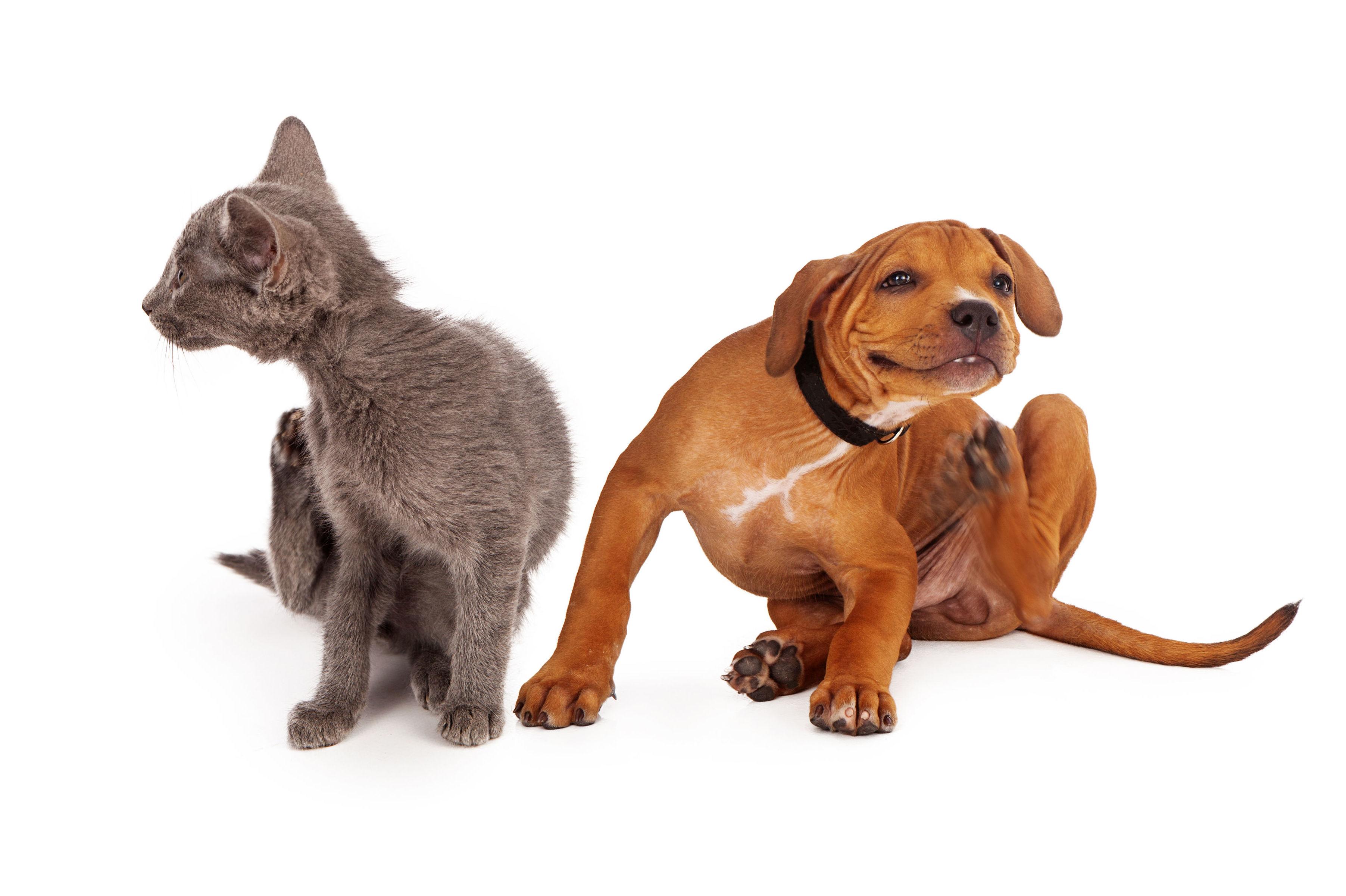 Cuidamos de gatos y perros