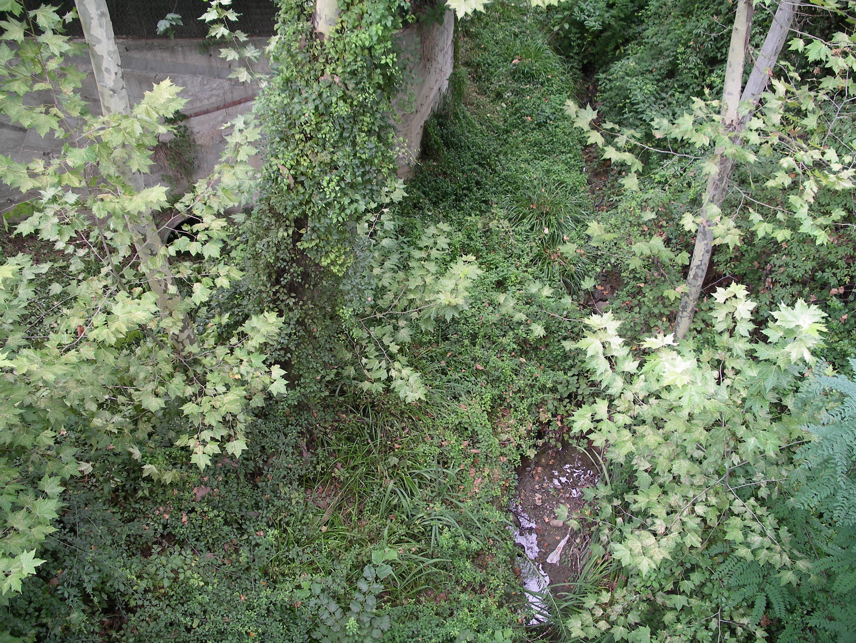 Diez plantas que purifican el aire de tu casa