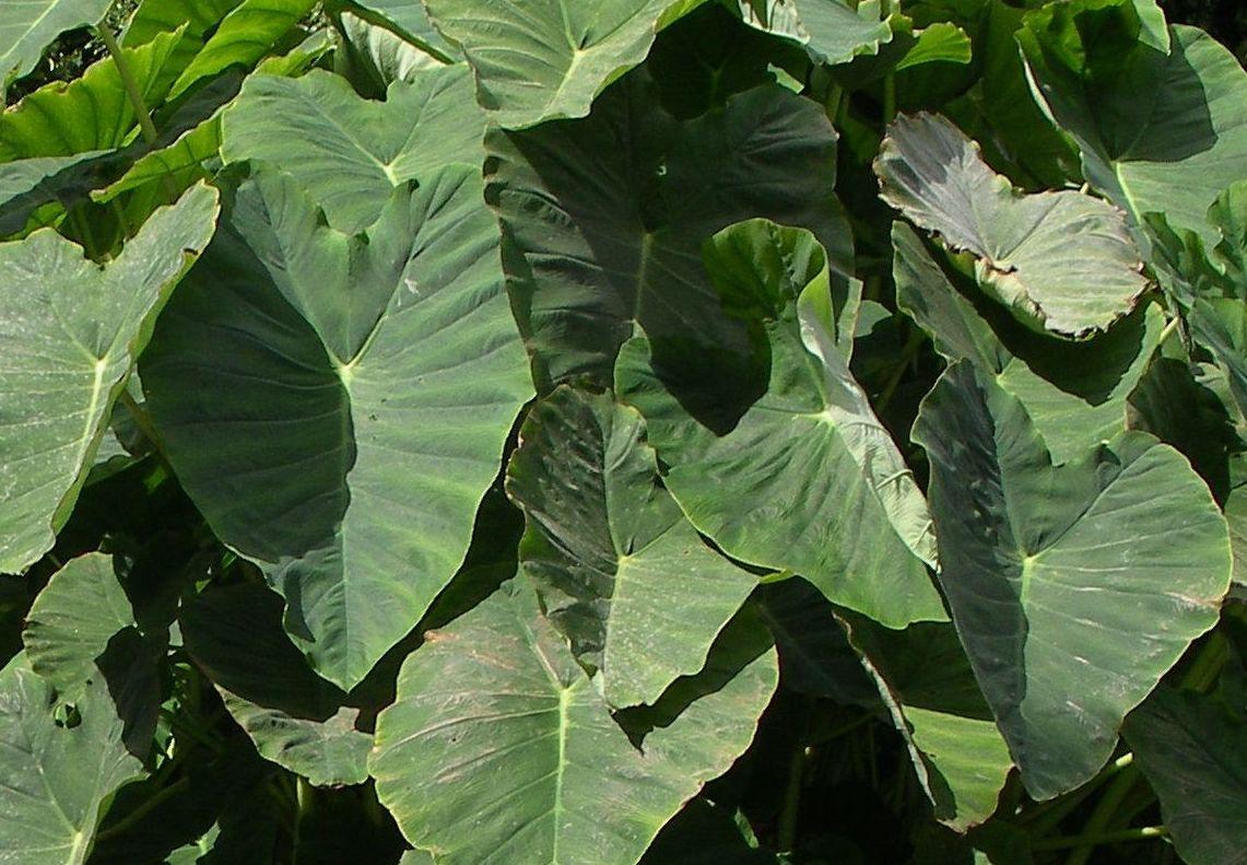 Un proceso de fotosíntesis artificial para limpiar el aire