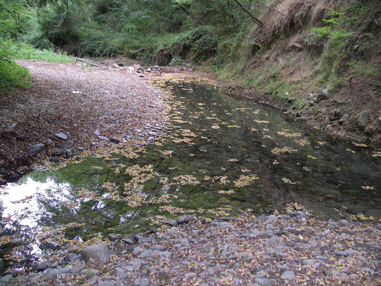 Intoxicación por metales pesados y su eliminación a través de remedios naturales