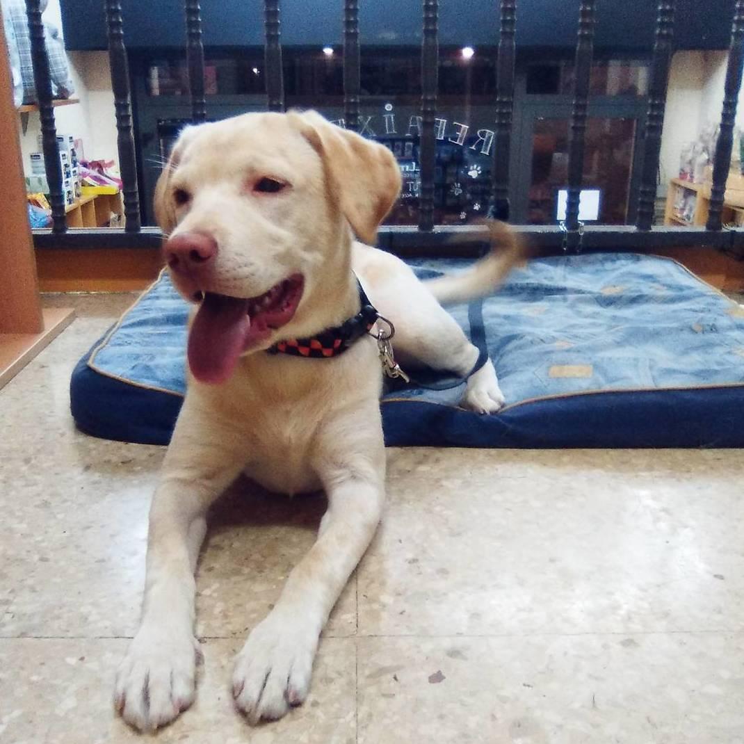 Foto 17 de Peluquería canina y felina en Vilassar de Mar | Tot Pinso