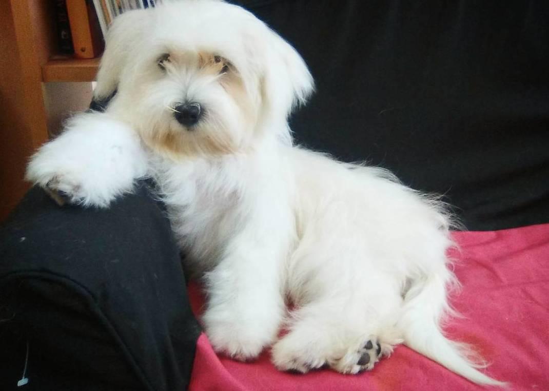 Foto 11 de Peluquería canina y felina en Vilassar de Mar | Tot Pinso