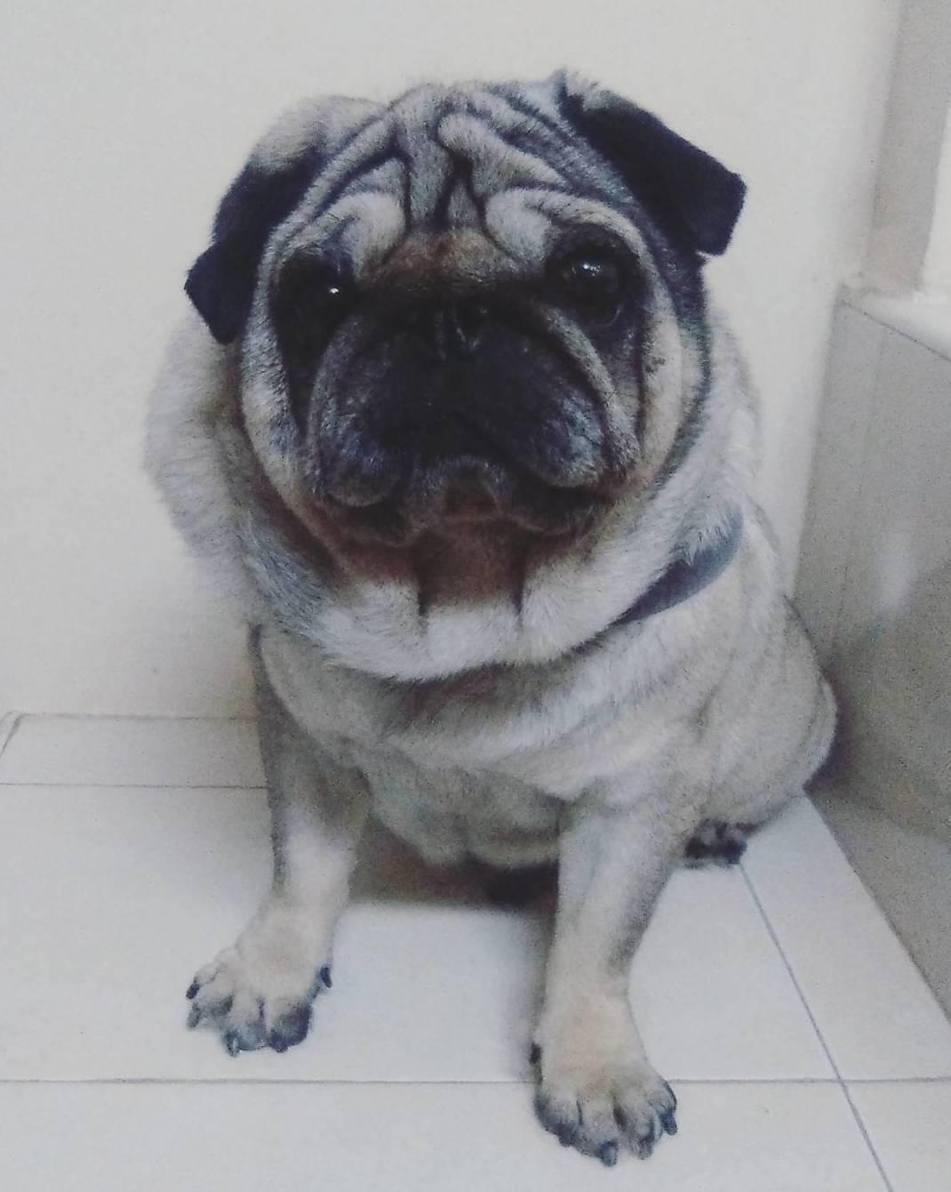 Foto 15 de Peluquería canina y felina en Vilassar de Mar | Tot Pinso