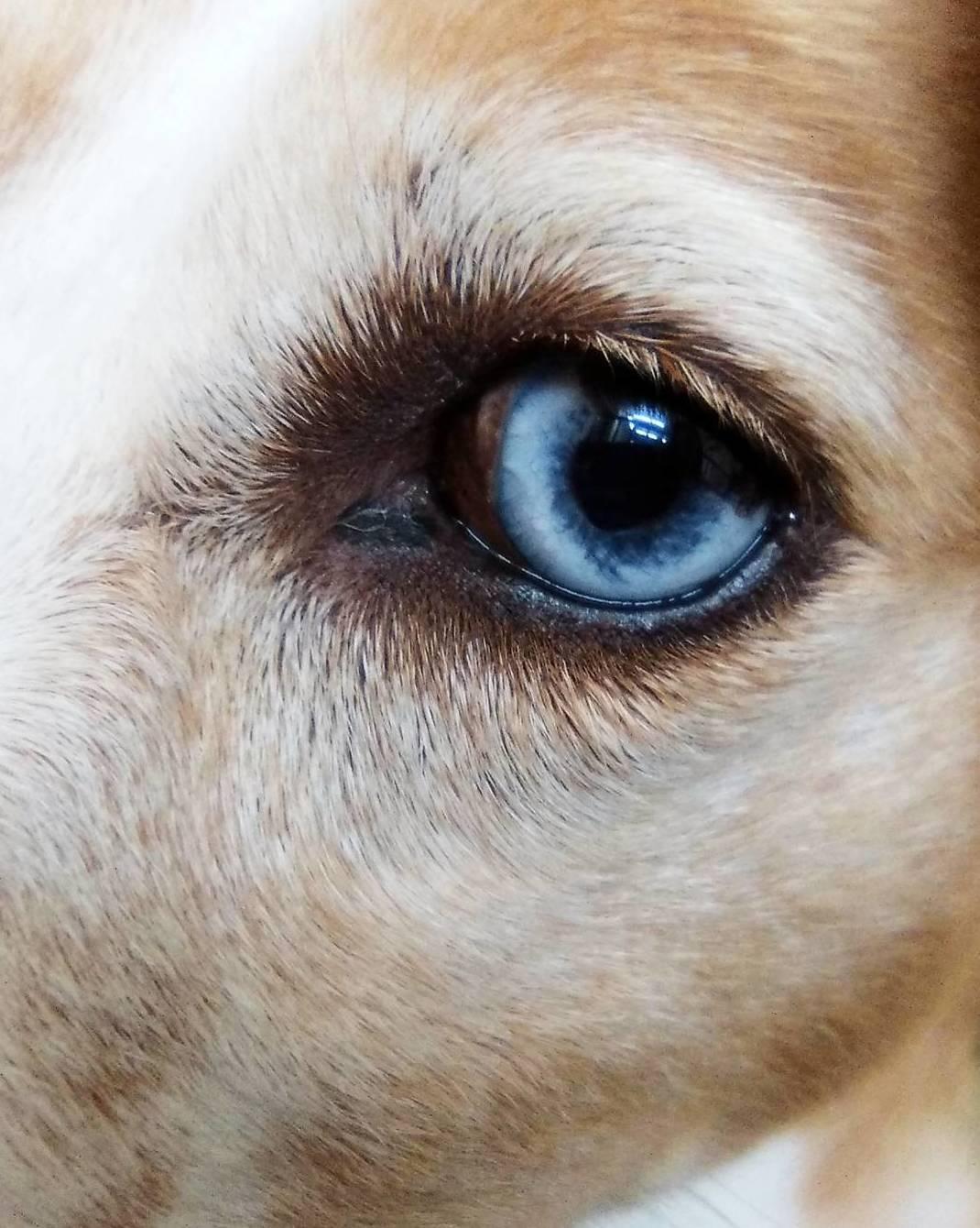 Foto 20 de Peluquería canina y felina en Vilassar de Mar | Tot Pinso