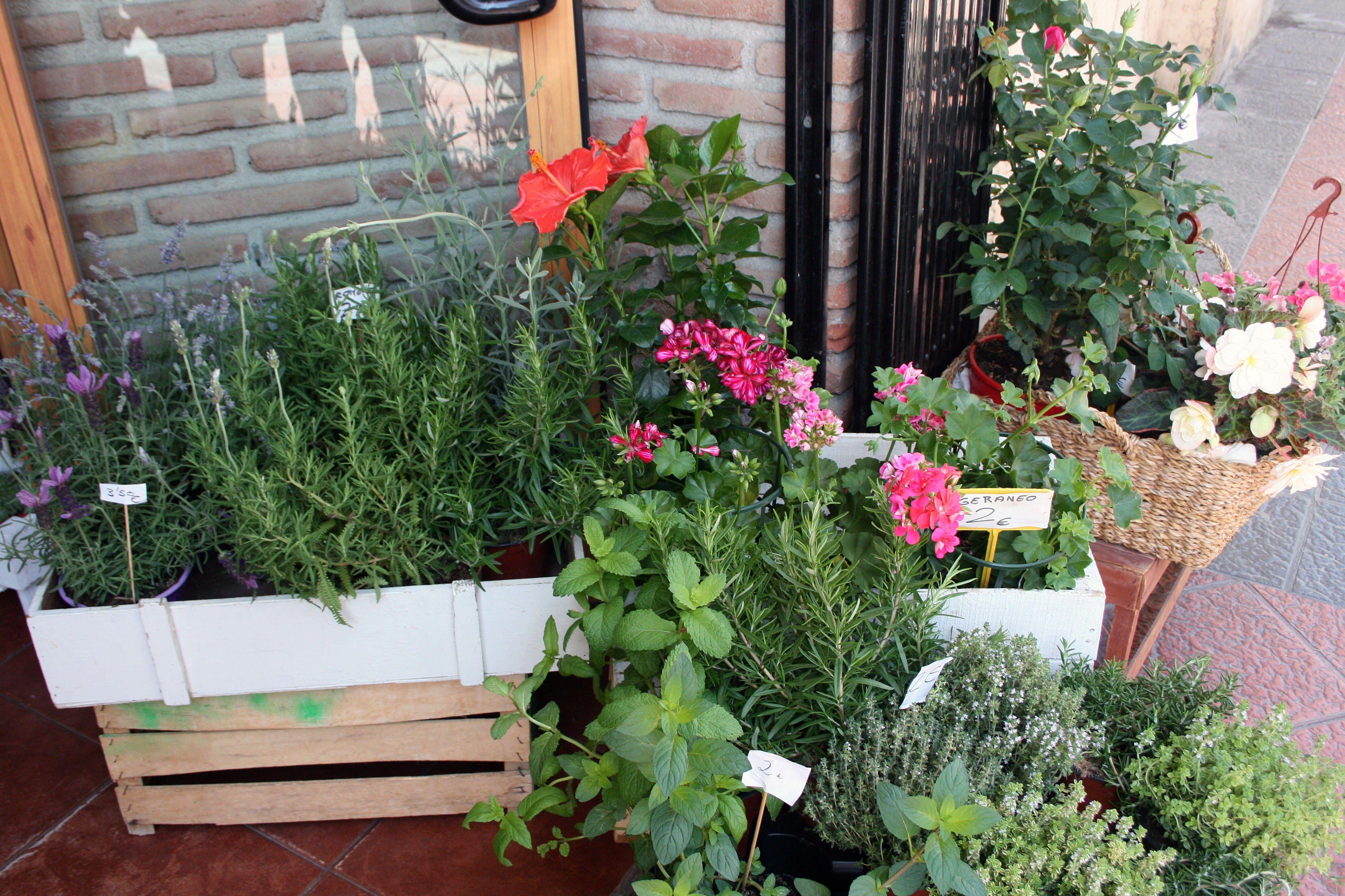 Foto 6 de Florists en Almuñécar | El Jardín de Charlotte