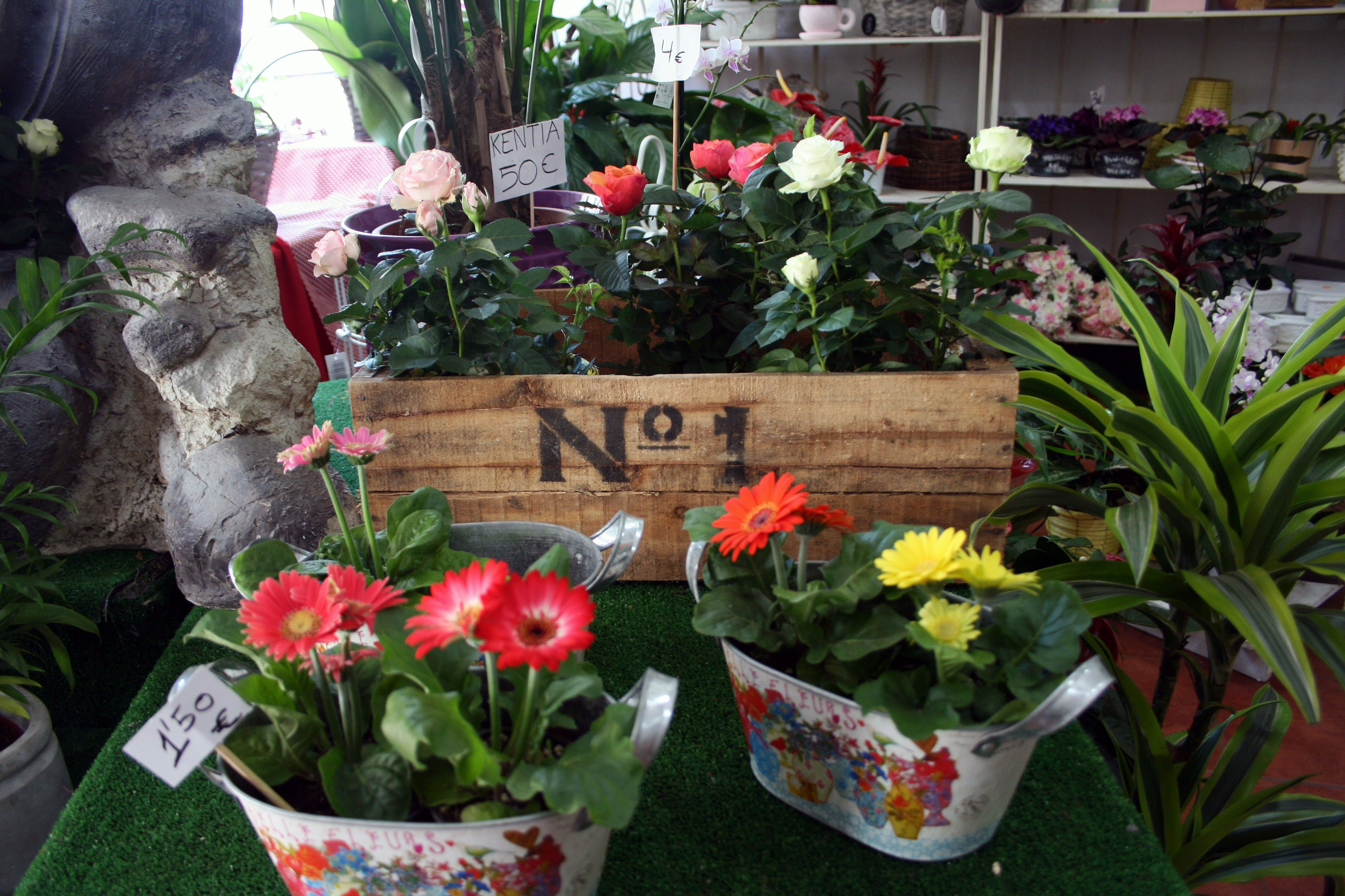 Foto 1 de Florists en Almuñécar | El Jardín de Charlotte