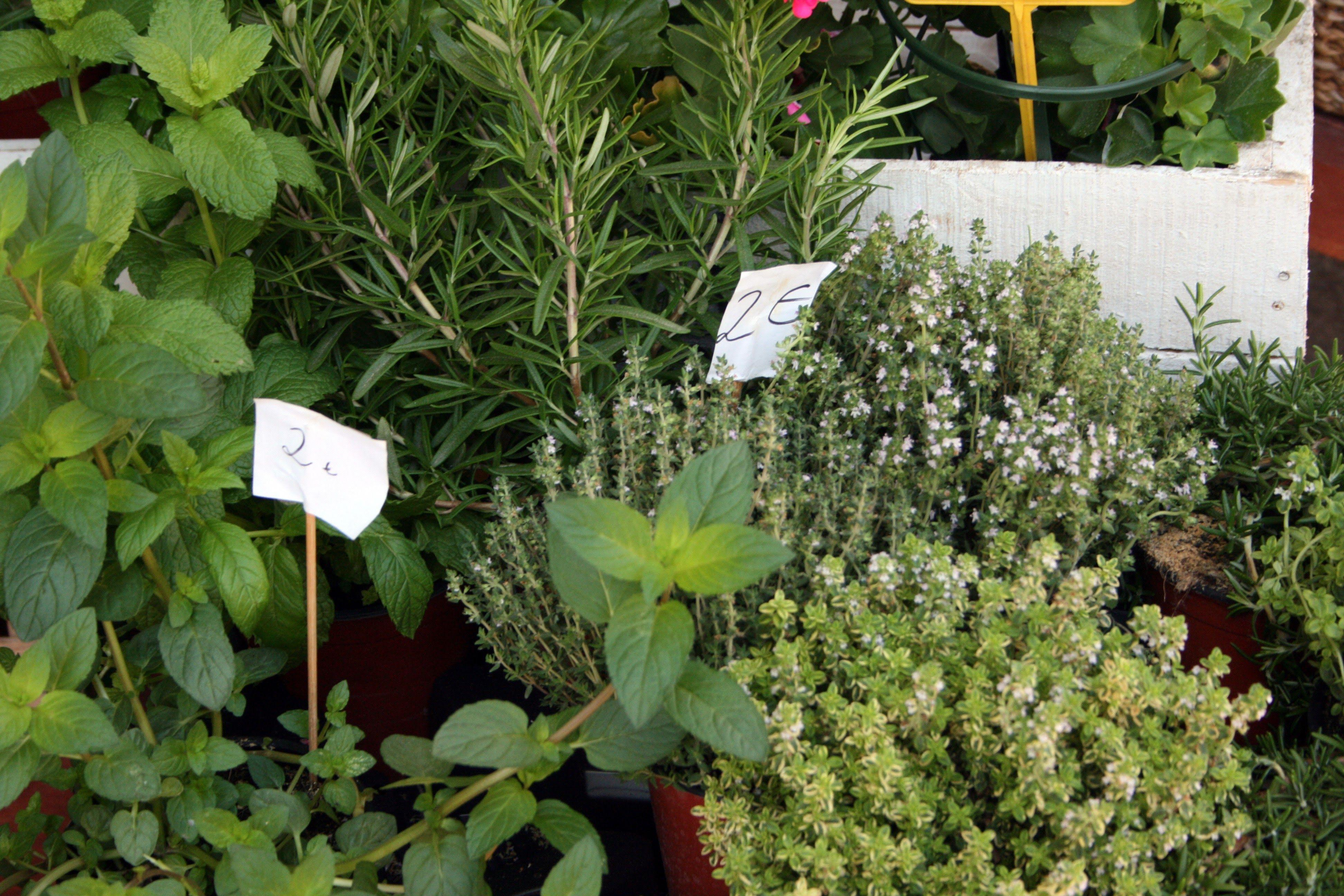 Foto 10 de Florists en Almuñécar | El Jardín de Charlotte