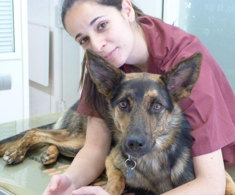 Clínica veterinaria de urgencias en Alcorcón