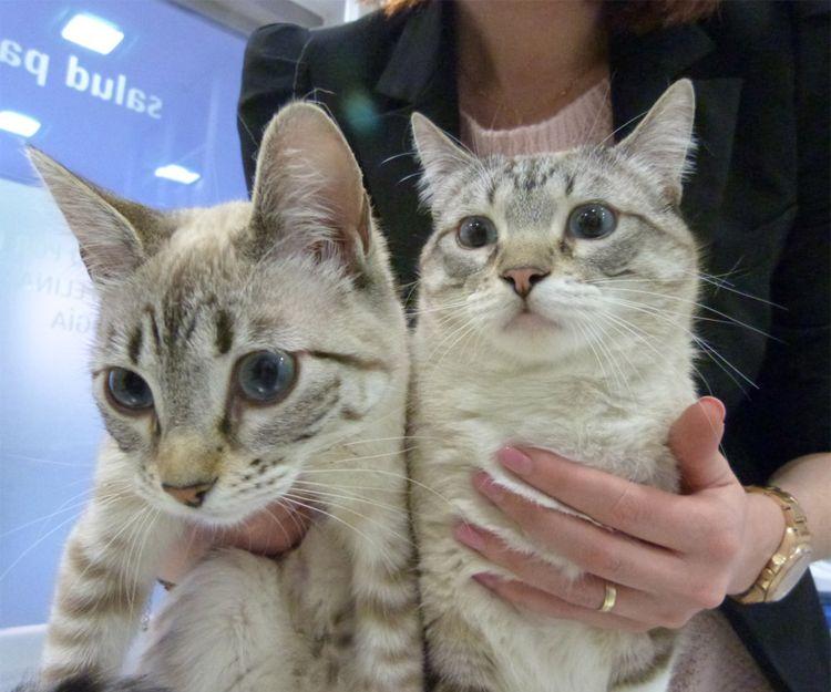 Vacunas y revisiones para gatos en Alcorcón