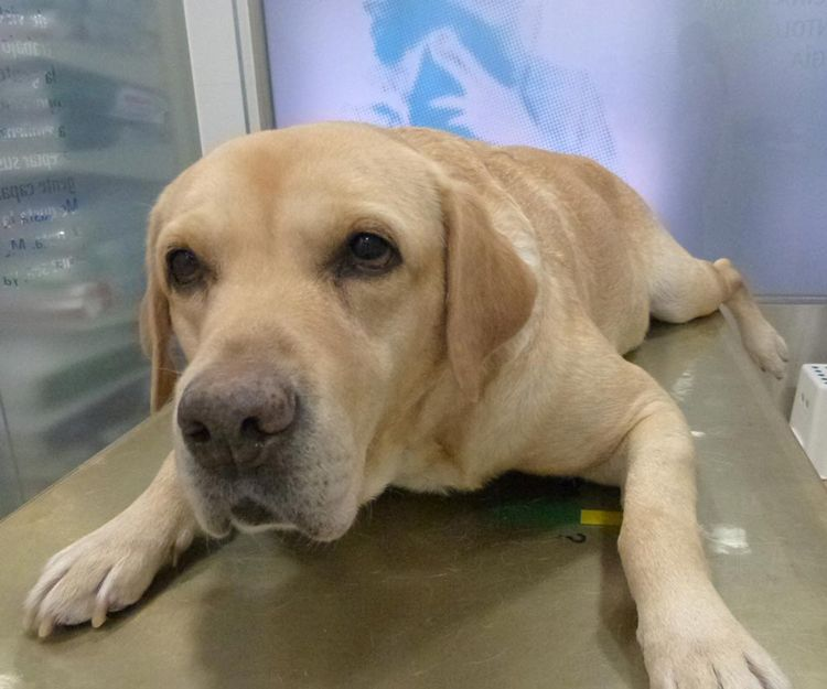 Clínica veterinaria especializada en fisioterapia para perros en Alcorcón
