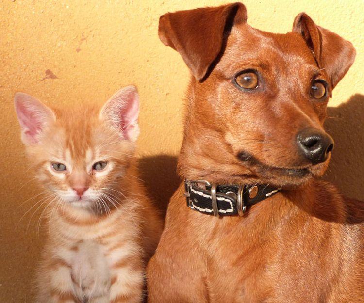 Vacunas para perros y gatos en Alcorcón