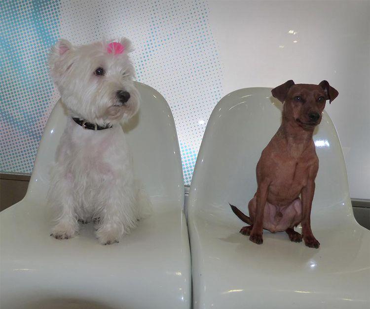 Vacunas para perros en Alcorcón