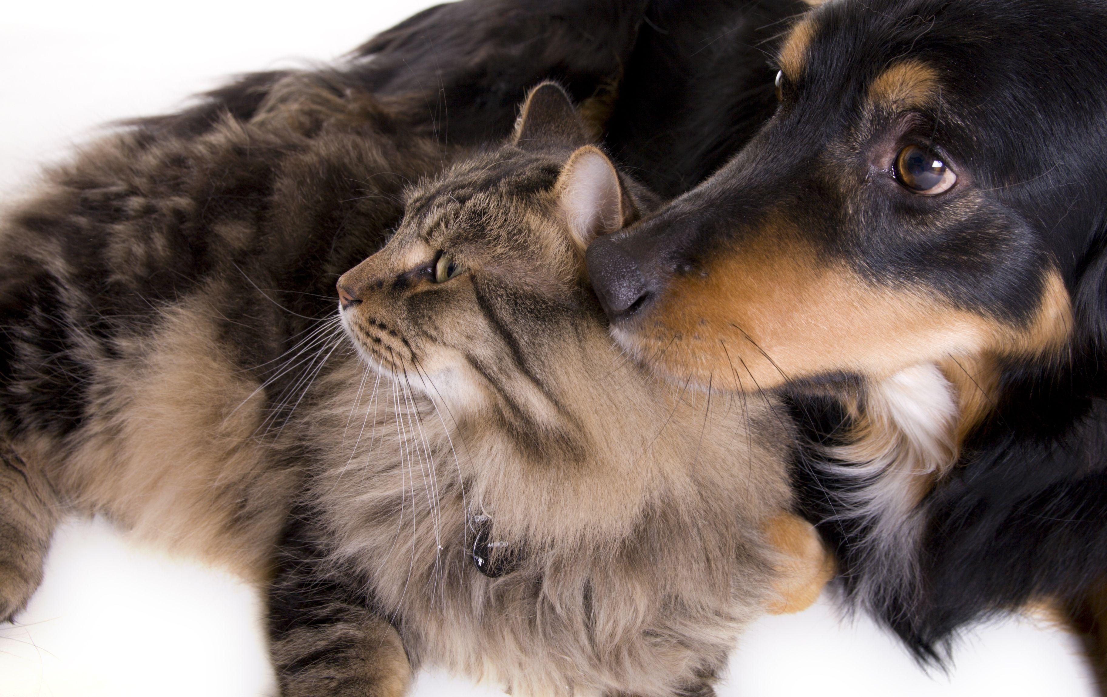 Peluquería canina: Servicios de Aeropuerto Clínica Veterinaria