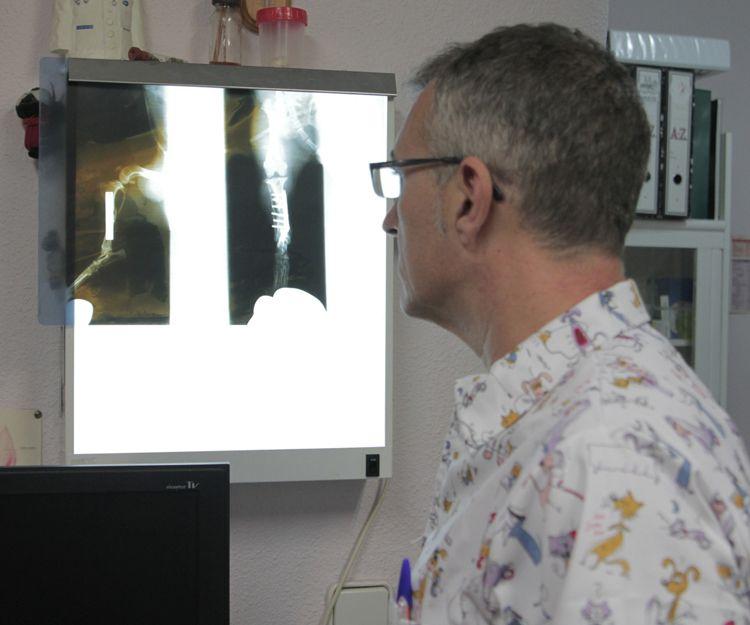 Radiografía para mascotas en Córdoba