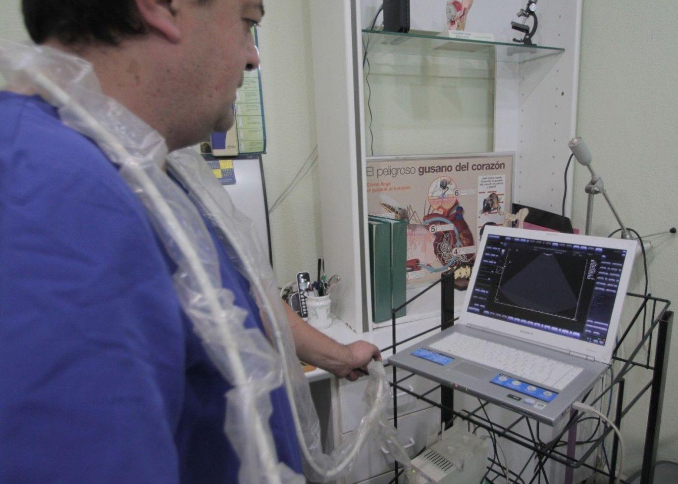 Medicina general: Servicios de Aeropuerto Clínica Veterinaria