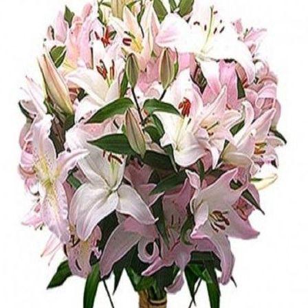 Liliúm oriental: Productos de Floristería Pothos