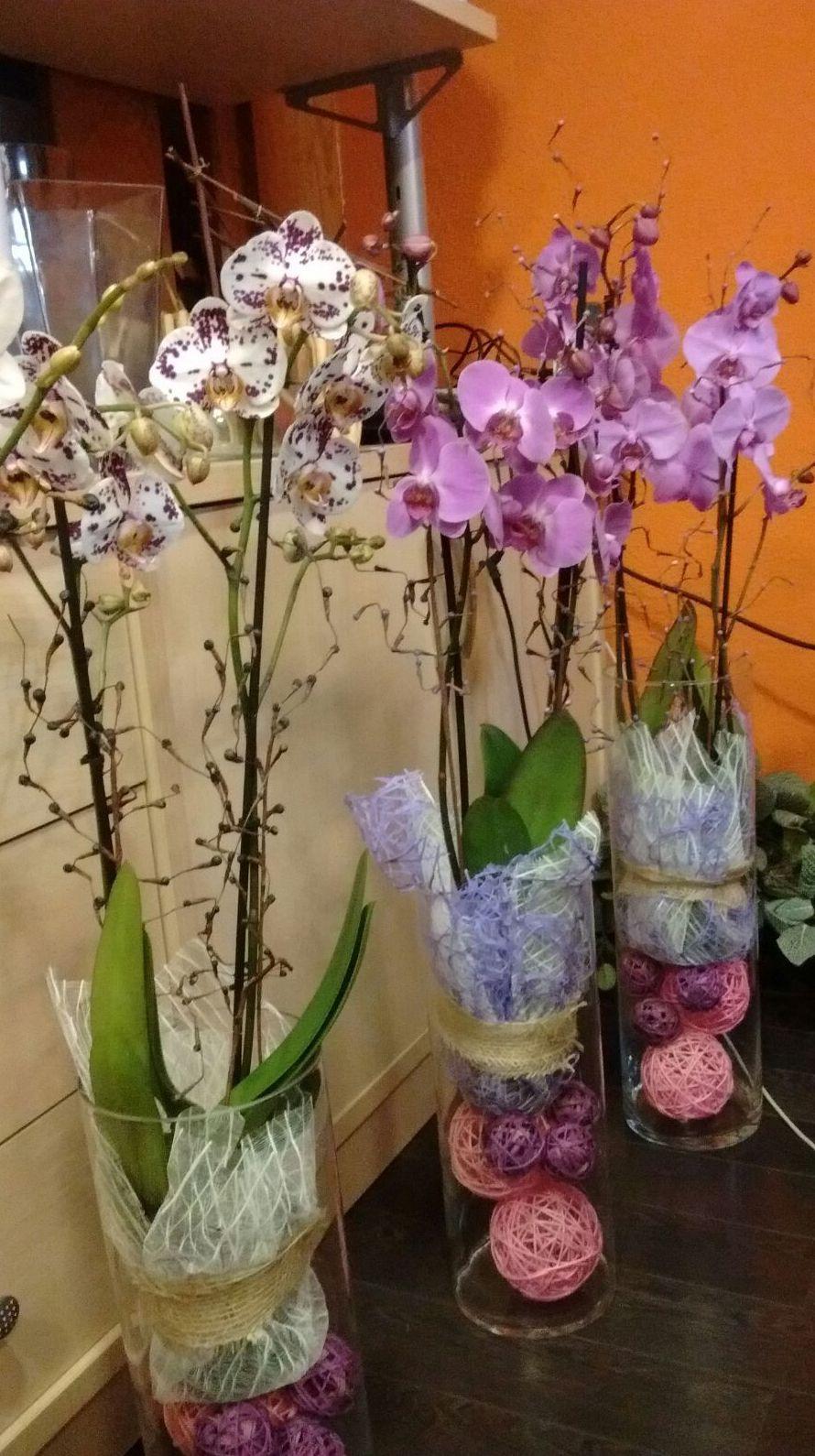 Comprar orquideas Logroño