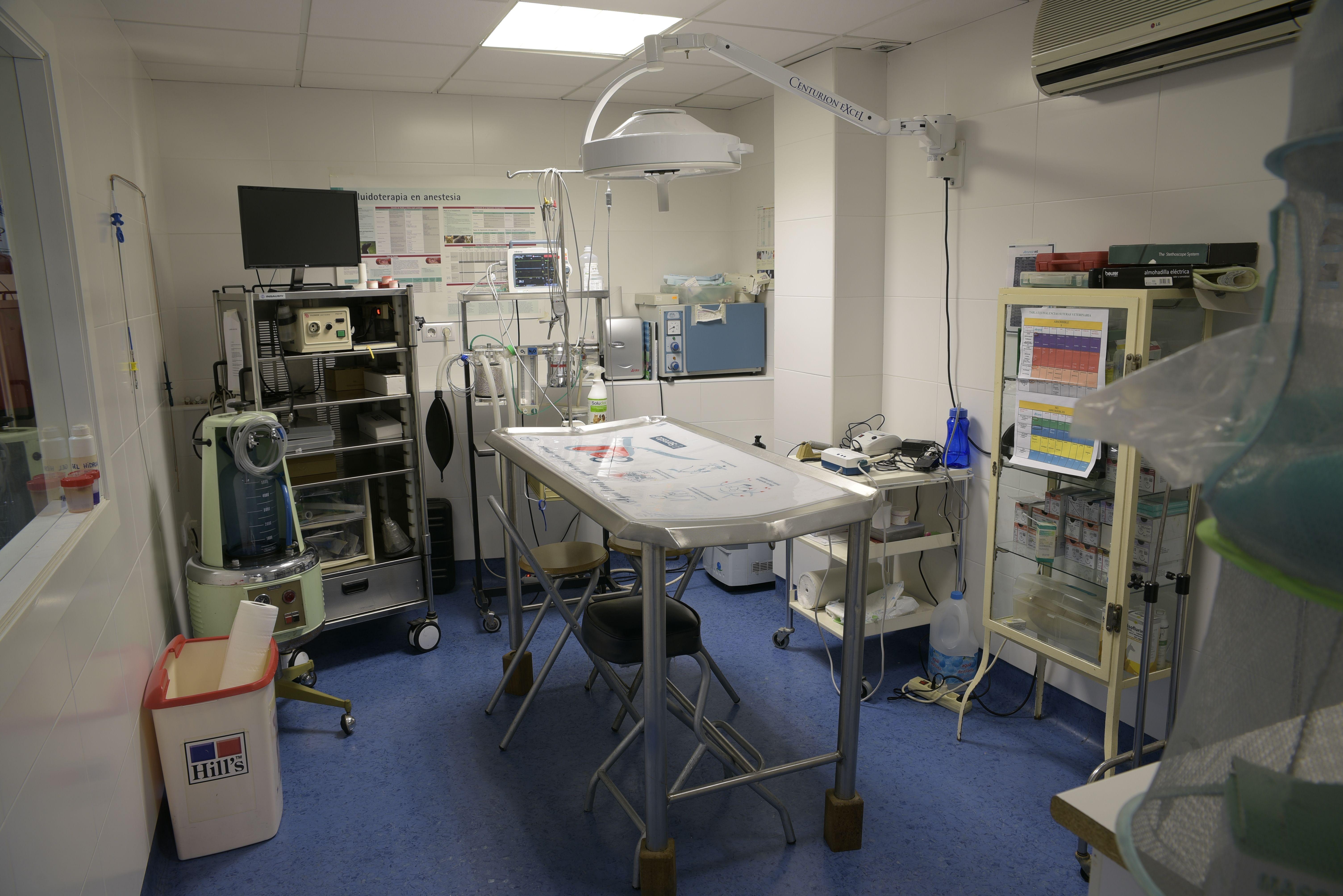 Foto 3 de Veterinarios en Albacete | Clínica Veterinaria Al-Beitar