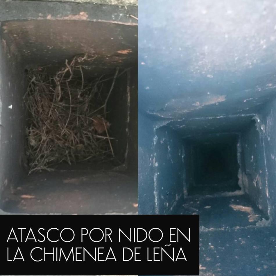 Atasco en la salida de humos por nidos de pájaro