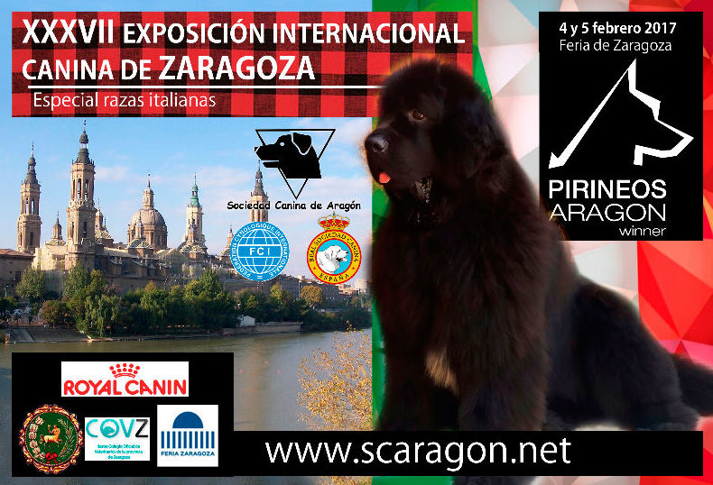 EXPOSICIÓN INTERNACIONAL CANINA DE ZARAGOZA