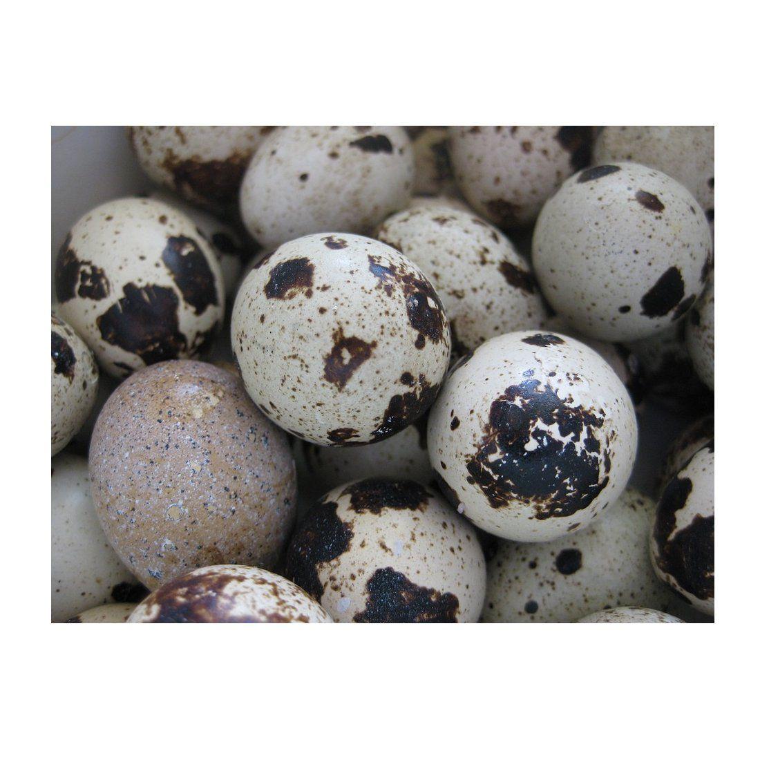 Huevos ecológicos de codorniz