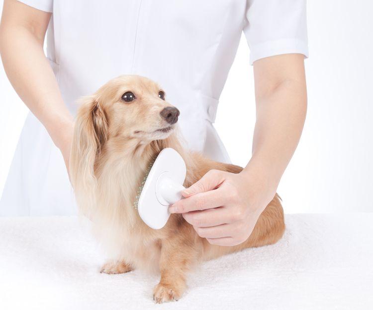 Cursos de estilismo y peluquería para animales