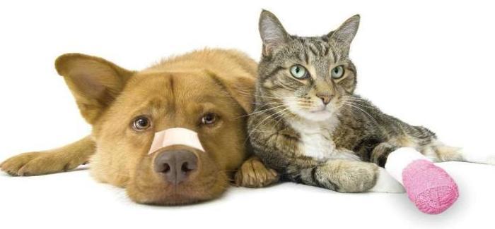 Cuidados y primeros auxilios para mascotas: Cursos de Aula de Natura