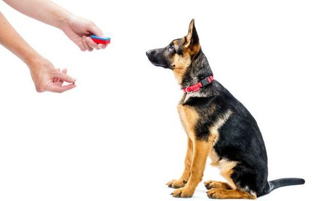 Adiestramiento y educación canina con refuerzo positivo: Cursos de Aula de Natura
