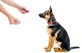 Cursos de educación y adiestramiento de animales