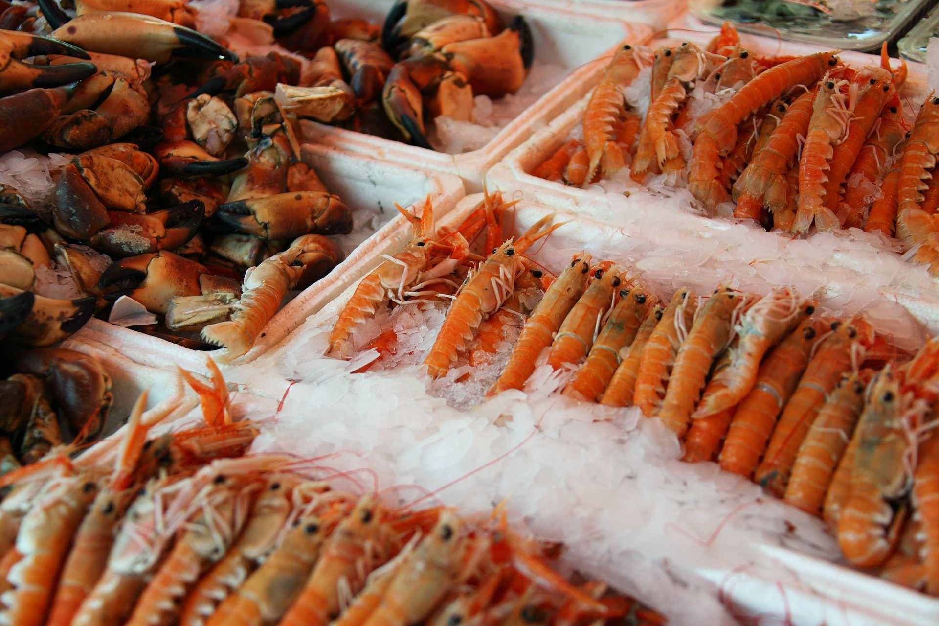 Marisco fresco, percebes, centollos, navajas, ostras o caracoles Barcelona