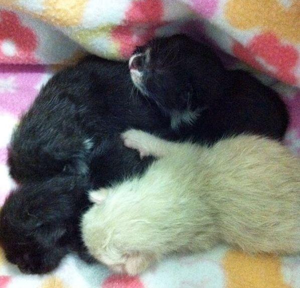 Veterinarios para gatos en Reus