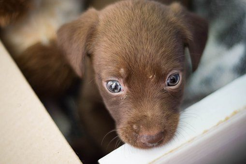 Charlas de Nutrición, Etología y Adopción canina: Productos y Servicios de ANIMALL