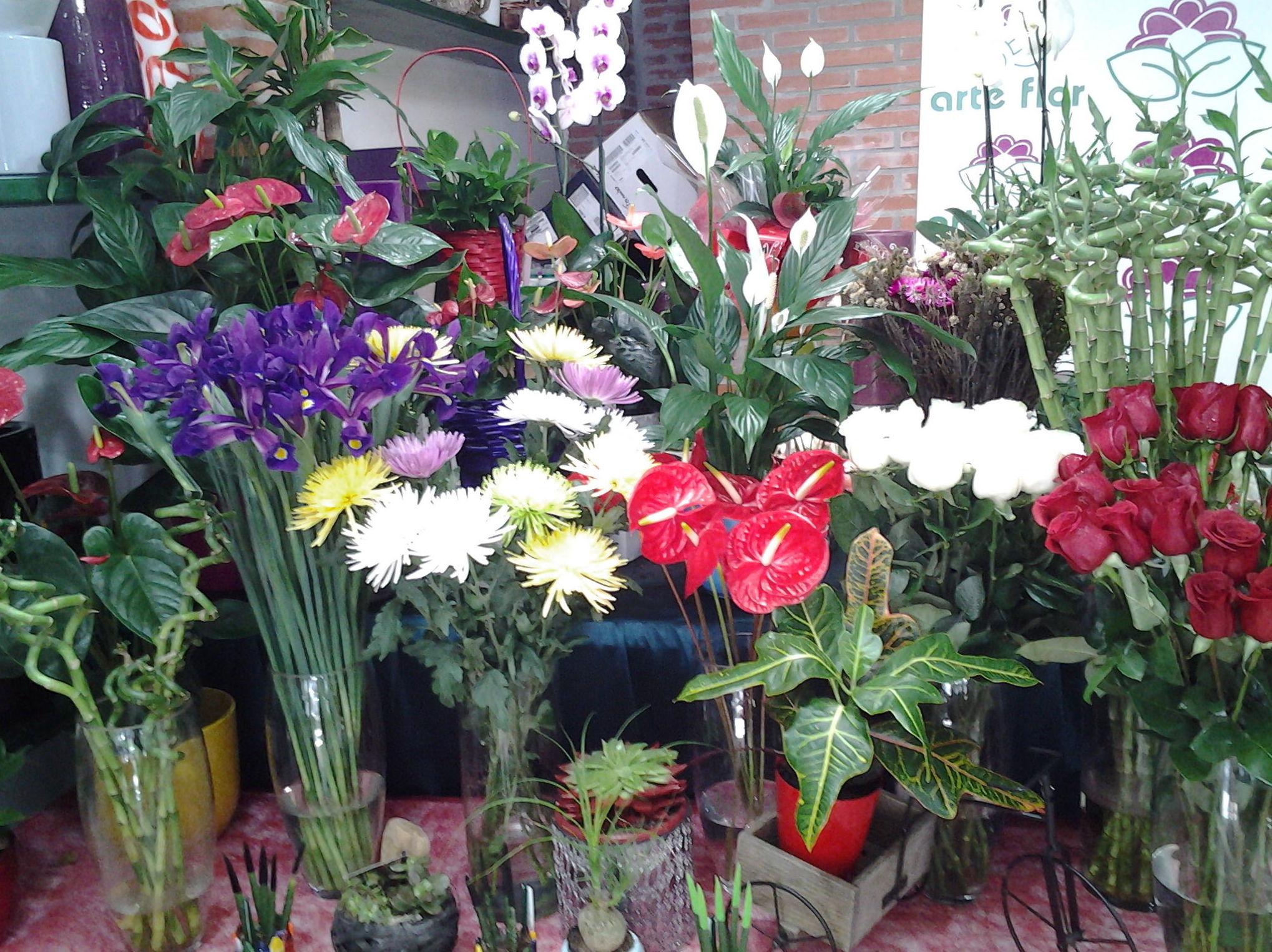 Foto 2 de Floristerías en Pravia | Arte Flor