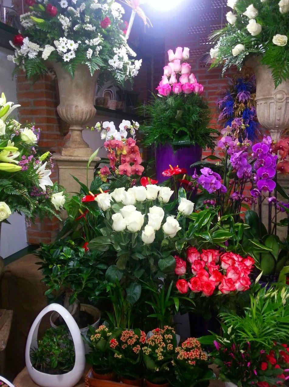 Interior floristería