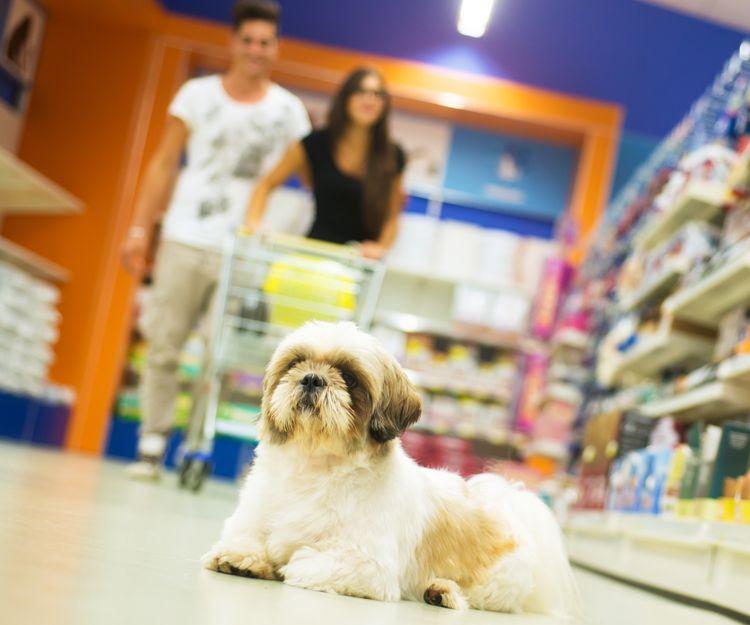 Complementos para mascotas en Baleares