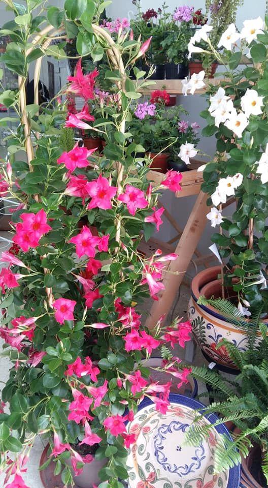 Foto 16 de Floristería en  | Girasoles Arte Floral