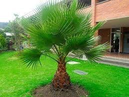 Semillas de palmera: Productos de Maquinaria El Casar