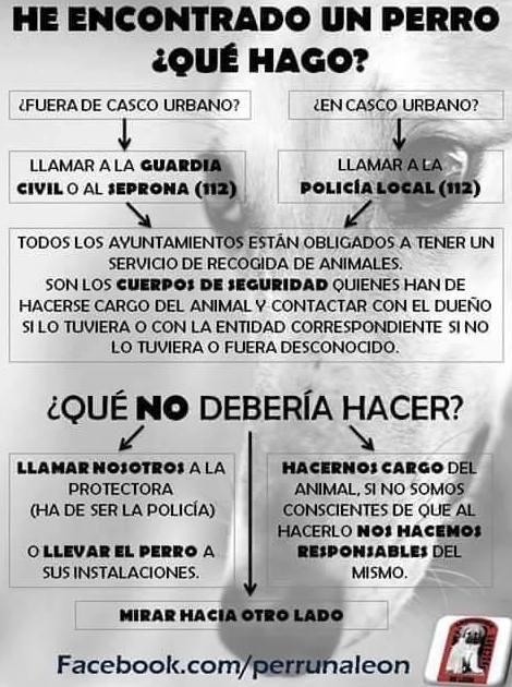 Foto 12 de Veterinarios en Puertito de Güímar | Veterinario El Puertito