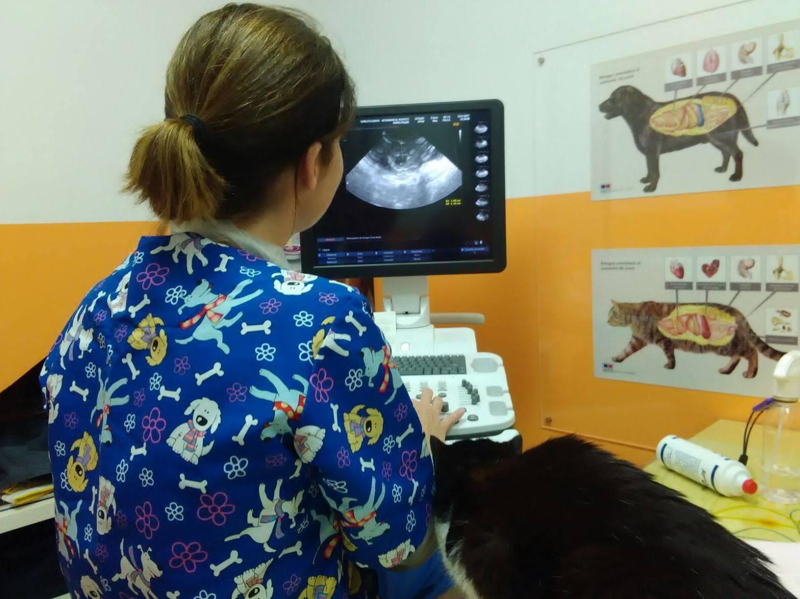 Foto 7 de Veterinarios en  | Veterinario El Puertito